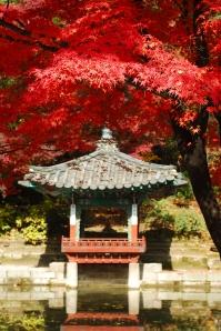 Japanese Marple