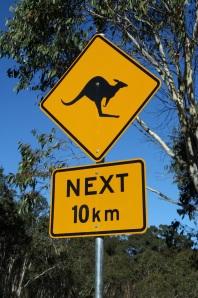 Kangaroo Crossing