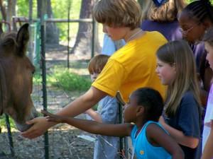 Checkin out the farm animals at Indigo Farms, June 2008